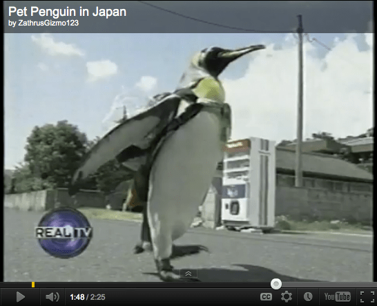 Pet Penguin Wears Backpack