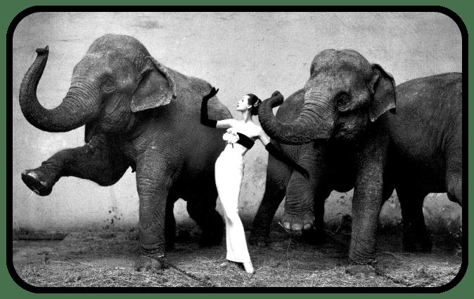 Emotional Elephants