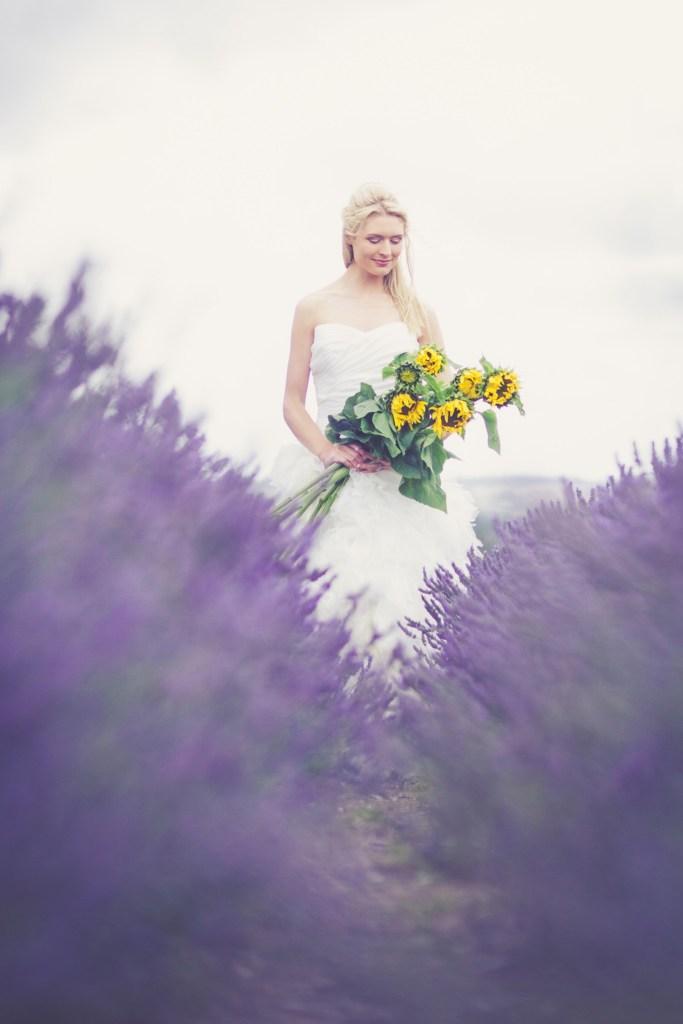 Hitchin-Lavender-Fields-30