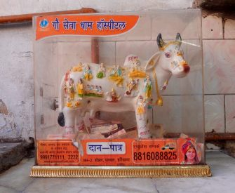 Cow offering box delhi