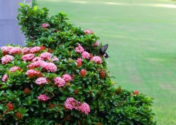 flowers-with-bird