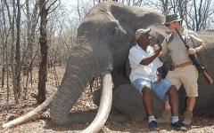 Twitter Zimbabwe elephant ivory trophy hunting