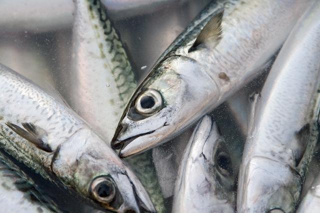 魚の目を自分で治すにはどうすればいいの?早く治すコツと予防法