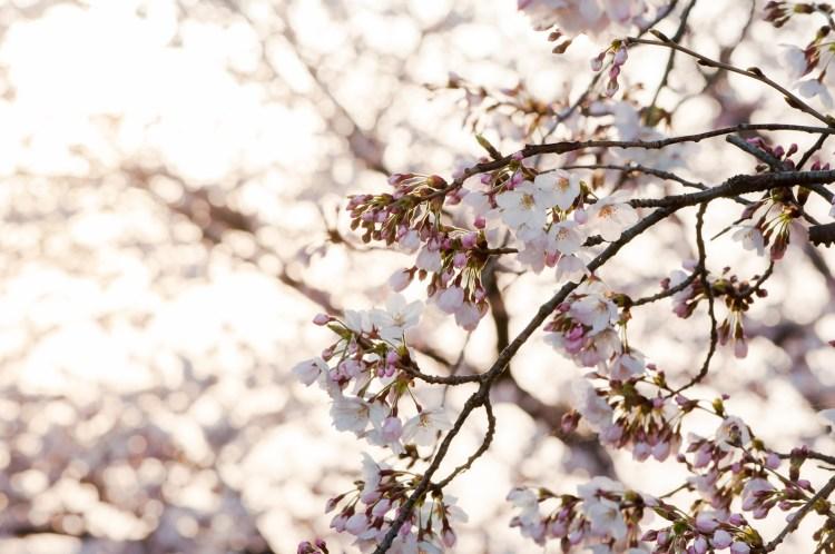 3月といえばやっぱりコレなイベント・催し・風物詩特集!