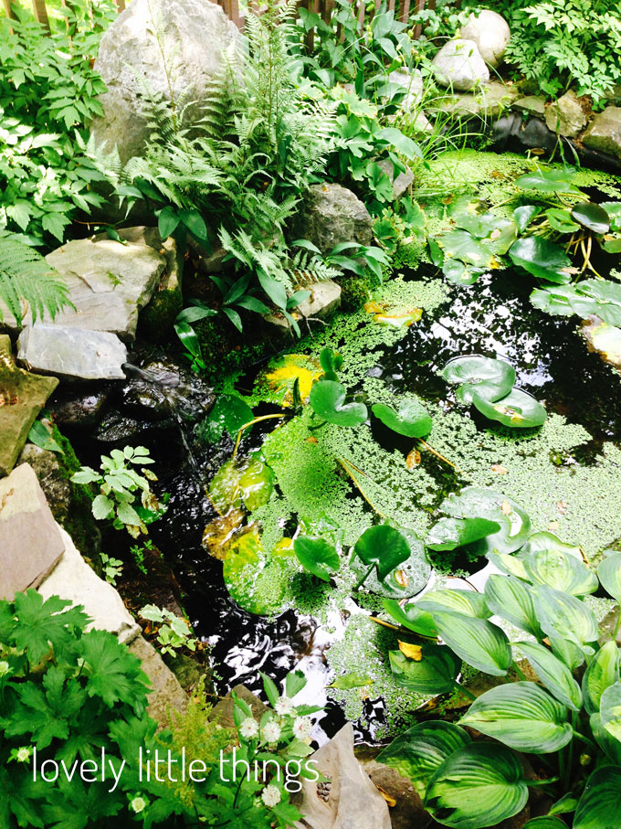 lily-pond