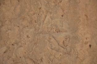 Fossilien im GEOPARC Bletterbach
