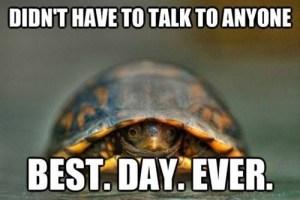hermit_turtle