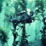 Beautiful thick kelp forests at Picnic Beach dive site.