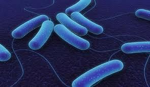 bluebacteria