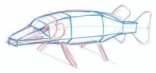 Another way to visualize the structure of the fish and help you with shading is to think of the fish as a set of flat planes. Where would the shadows fall as you move the light source around?