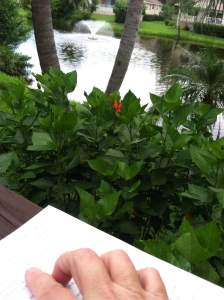 Kindred Heart Writer Karen Evans enjoying the sunshine on her deck.