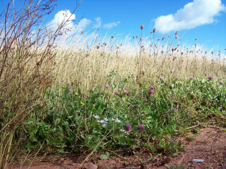 north-point-wild-flowers