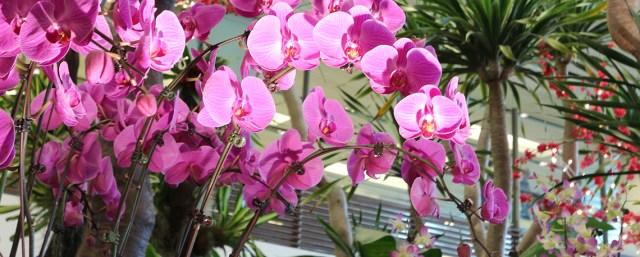 orchid_garden_900