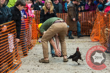Organiser and landlord Dave Wragg provides his hen catching expertise.