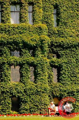 The stunning vines on the walls of the Fairmont