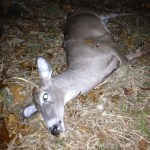Spike Buck Down