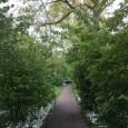 Op een druilerige maar mooie ochtend toch een mooi plaatje in Amstelveen!  Tweet