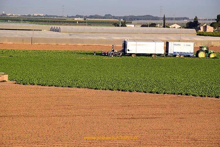 Camión de recolección de lechugas en el campo de Cartagena