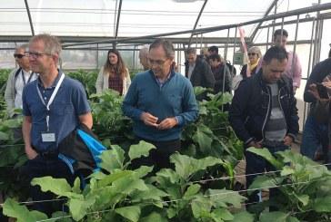Investigan en Paiporta variedades de tomate tolerantes a altas temperaturas