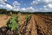 Día 30 de junio. Jornada sobre las enfermedades de la madera de la vid. La Rioja
