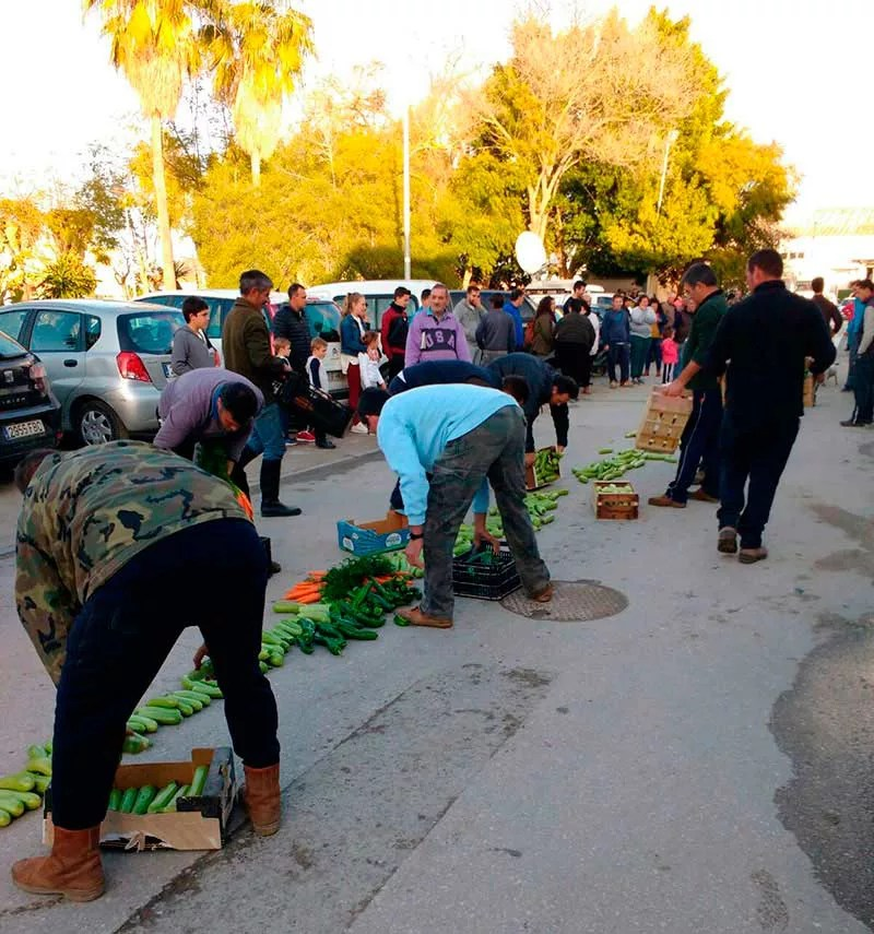 Agricultores de Sanlúcar de Barrameda destruyen hortalizas. Acto de protesta por los bajos precios en origen