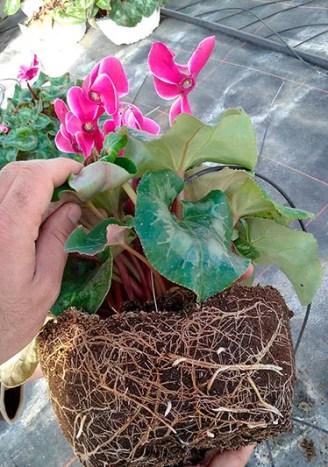 Projar-plantas-ornamentales-2