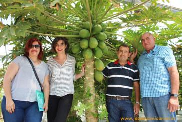 Anecoop pone cabeza a la producción de papayas