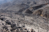Sustratos para recuperar zonas incendiadas