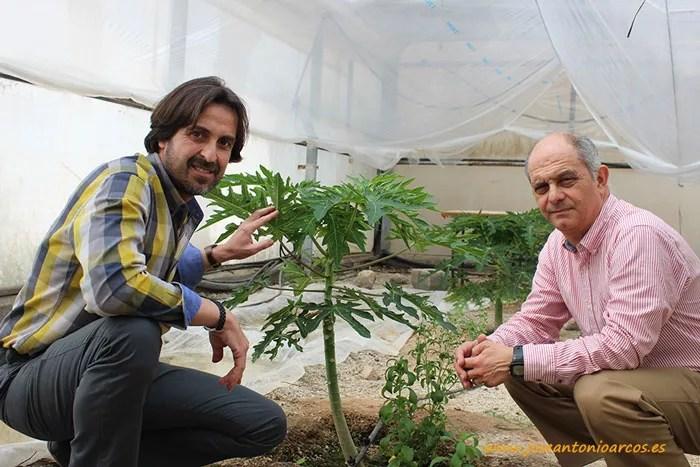 Profesores de EFA Campomar en el vivero de papaya de la escuela