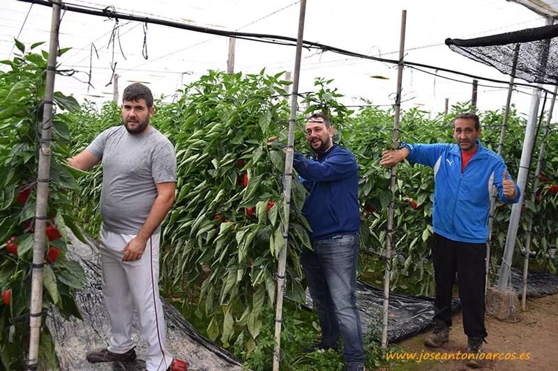 Los agricultores Emilio Crespo, Sergio Aguilar y Manuel Salinas.