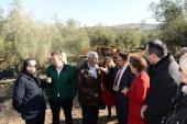 Cooperalia: concentración de oferta entre cooperativas olivareras