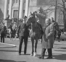 Sullivan-horse