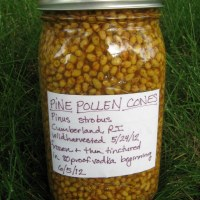 Making a Pine Pollen Tincture