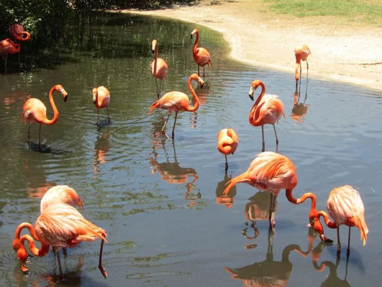 Flamingos at Xcaret