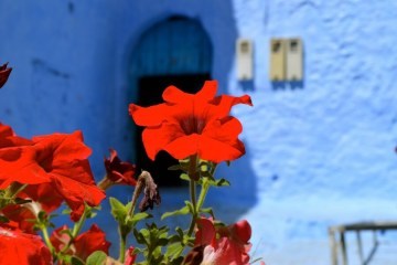 50 shades of blue at Chefchaouen