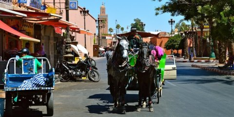 Horse carriage in Marrakech
