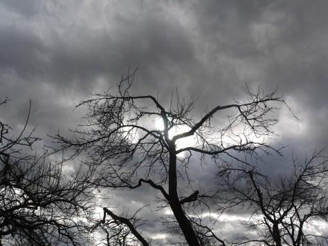trees-1376724_1280