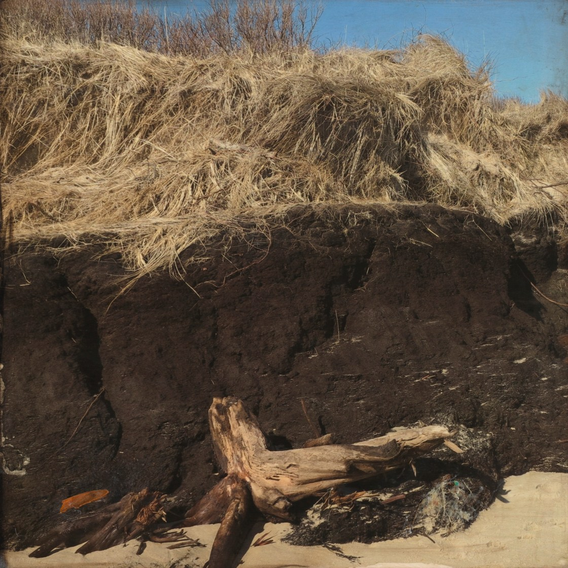 Cedar Bog Beneath 2015 encaustic 24x24 copy