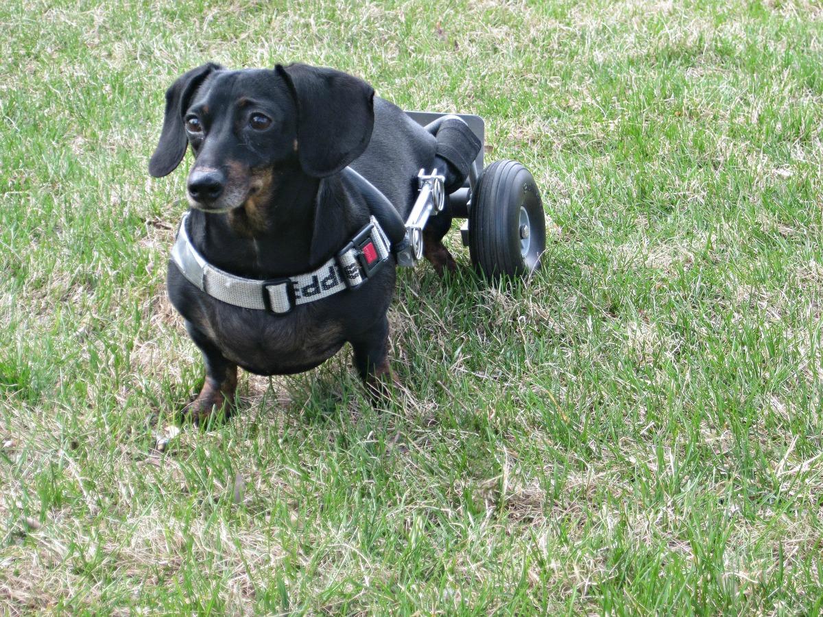 Fullsize Of Diy Dog Wheelchair