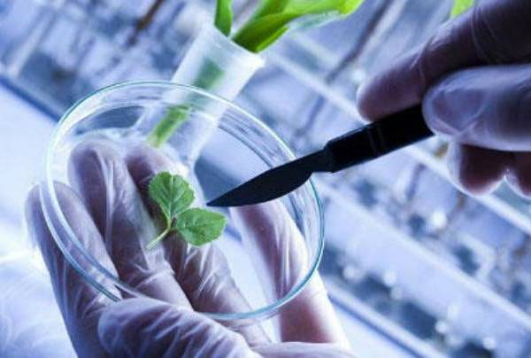 B.E. Biotechnology: Harnessing career opportunities