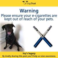 E-cigarettes can kill dogs