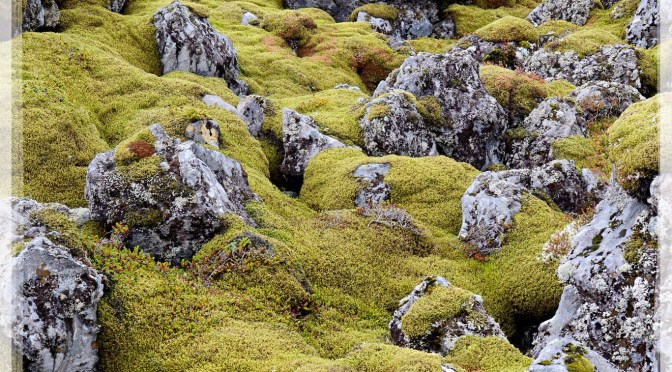 Moss, lichen and lava