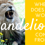 Where does the word dandelion come from?