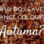 leaves change colour