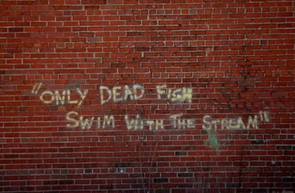 Only Dead Fish Swim With The Stream