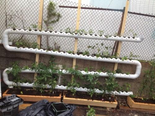 Startling Balcony Vegetable Garden Kit Balcony Vegetable Garden Kit Garden Design Ideas Balcony Herb Garden Kit Balcony Kitchen Garden India