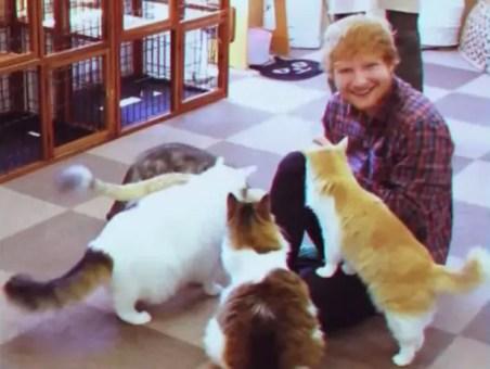 Ed Sheeran is a massive cat person.