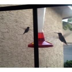 Small Crop Of Walmart Bird Feeders