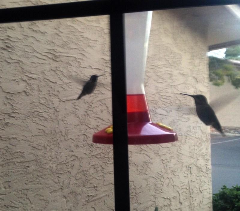 Large Of Walmart Bird Feeders