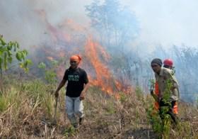 Perusahaan Terlibat Kebakaran Hutan Indonesia 2015